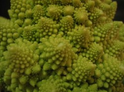 A Broccoli from Another Planet